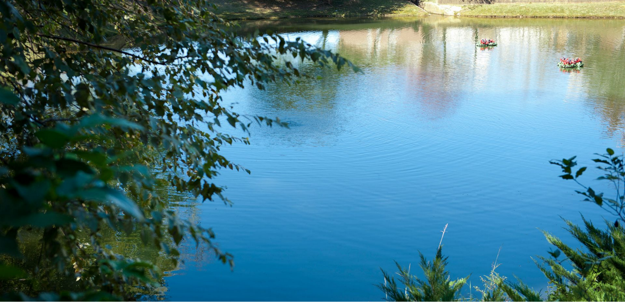 View of a lake from the woods
